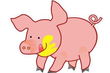 属猪怎么起名